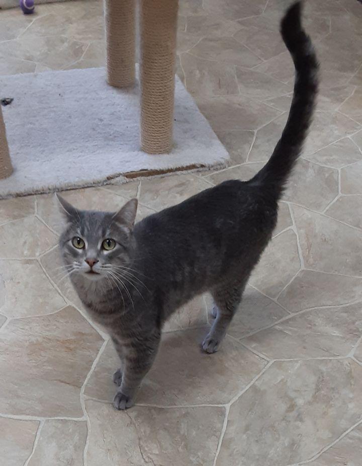 Catbird 2