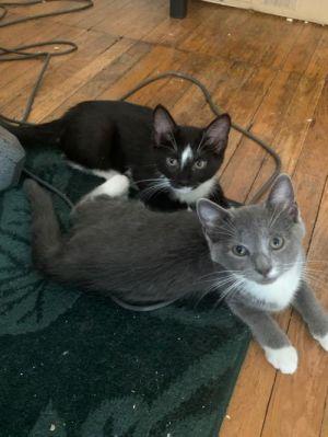 Sadie and Magnolia *bonded pair*