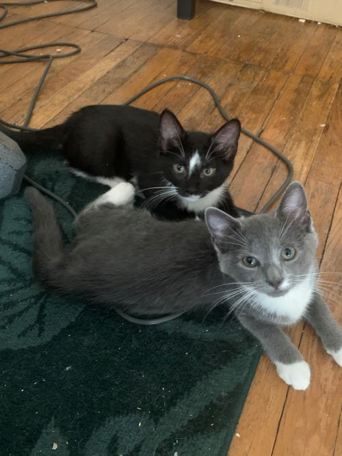Sadie and Magnolia *bonded pair* 1