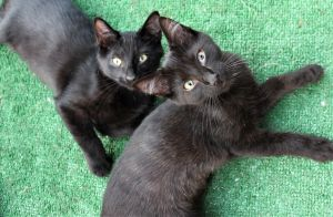 Eugene & Shadow (Bonded Pair) - Not Currently Accepting New Applications (Waitlist Only)