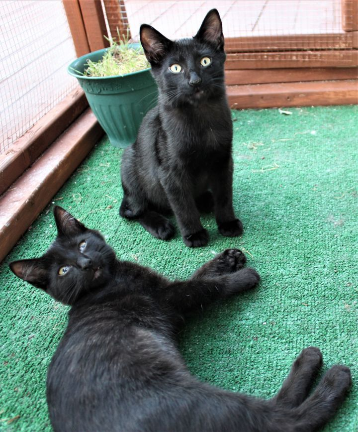 Eugene & Shadow (Bonded Pair) - Not Currently Accepting New Applications (Waitlist Only) 2