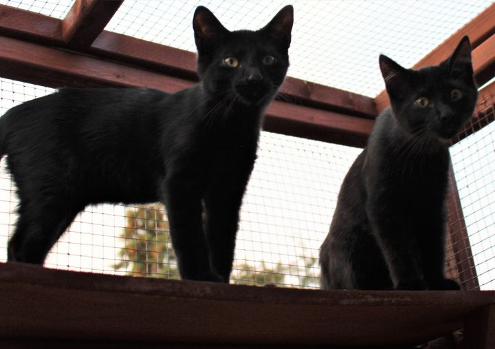 Eugene & Shadow (Bonded Pair) - Not Currently Accepting New Applications (Waitlist Only) 3