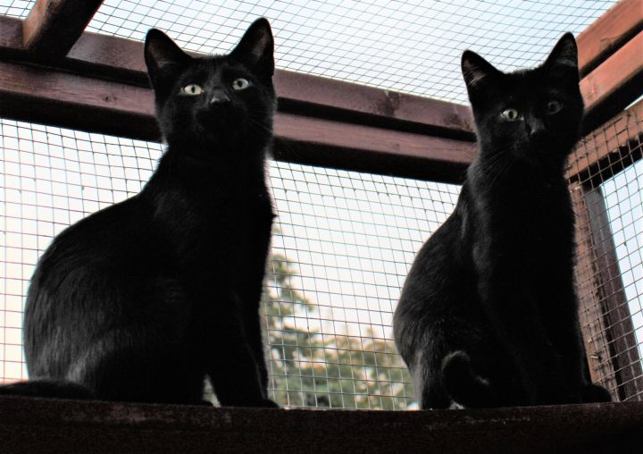 Eugene & Shadow (Bonded Pair) - Not Currently Accepting New Applications (Waitlist Only) 4