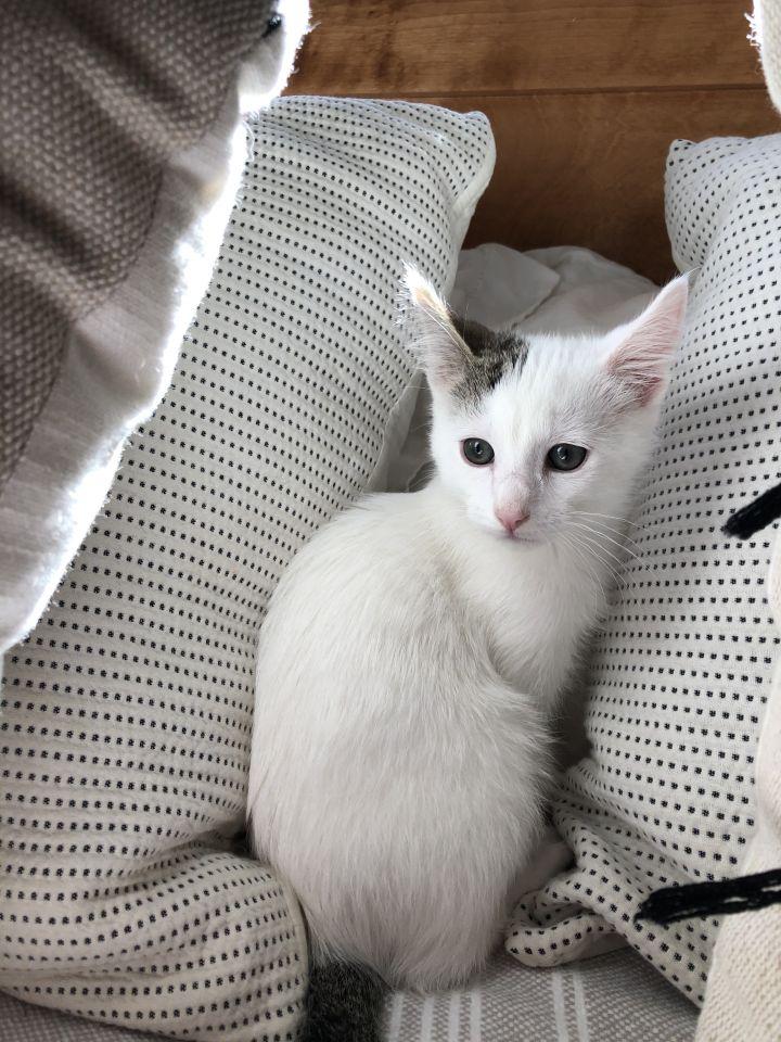Mochi - Pending Adoption 2