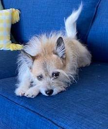 Winnie - 3 year old terrier mix Needs a quiet home with a secure yard No kids Meet Winnie We