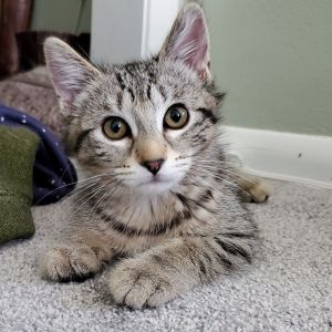 Lily - Not Currently Accepting New Applications (Waitlist Only)