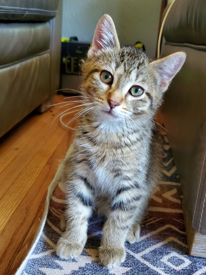 Kit - Not Currently Accepting New Applications (Waitlist Only) 2