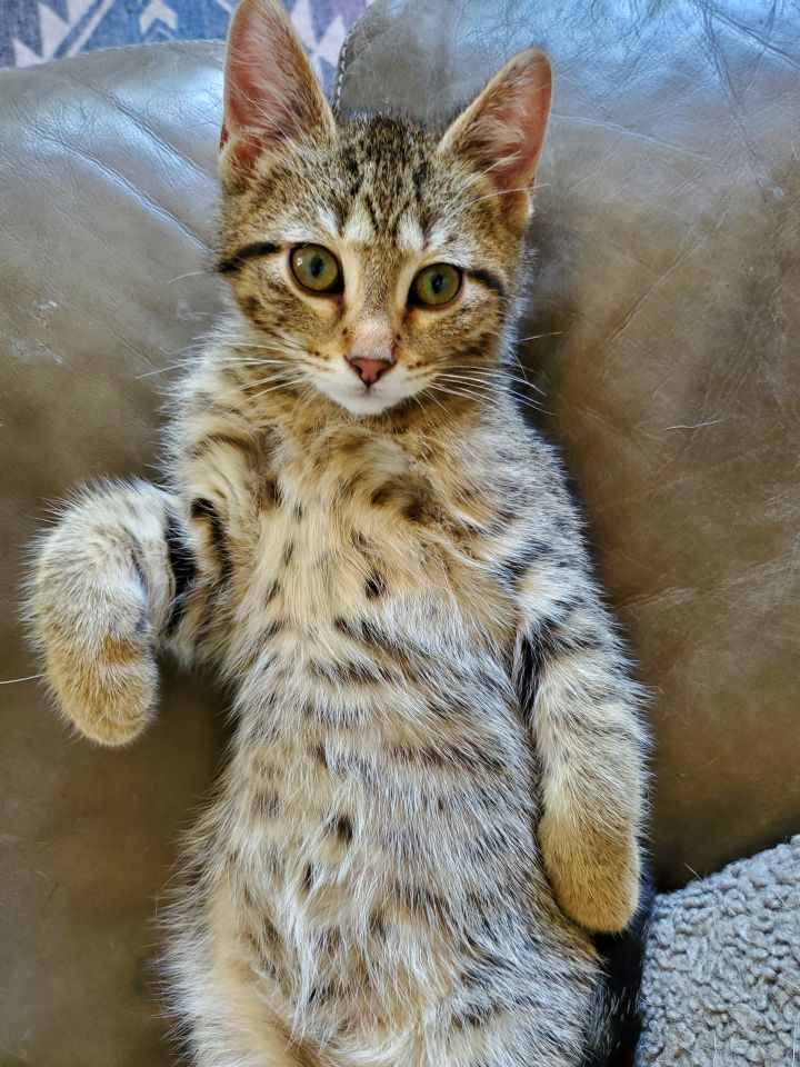 Kit - Not Currently Accepting New Applications (Waitlist Only) 3