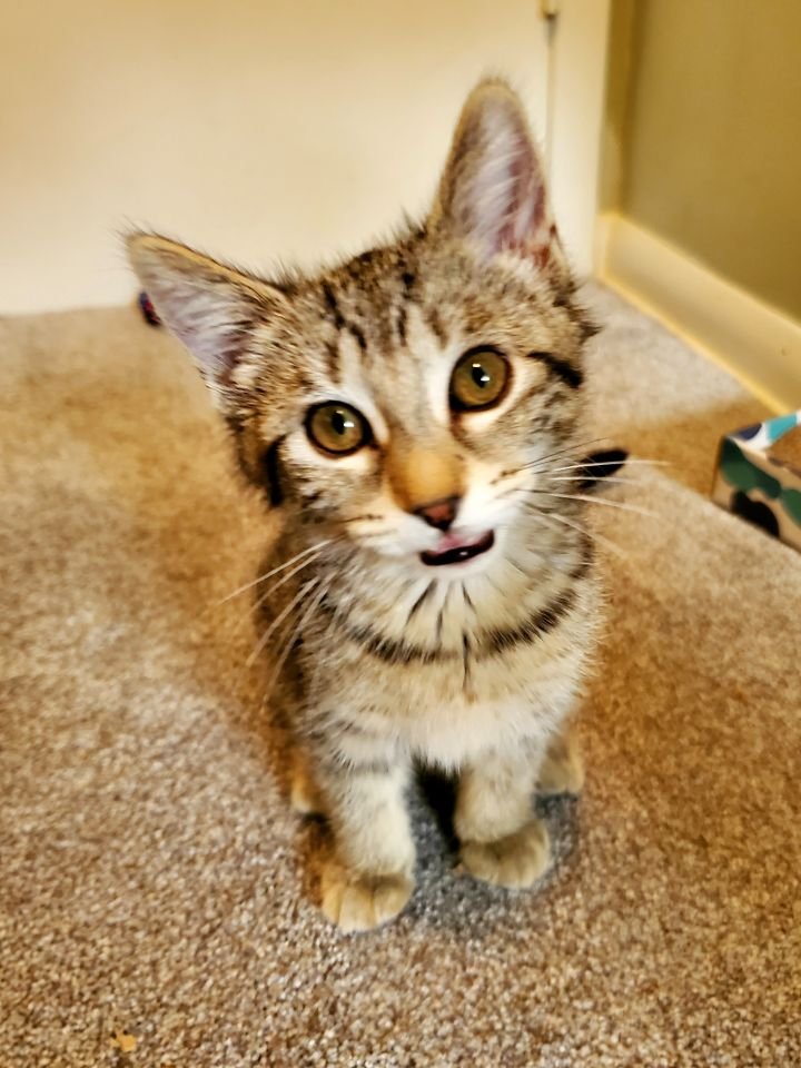 Kit - Not Currently Accepting New Applications (Waitlist Only) 4