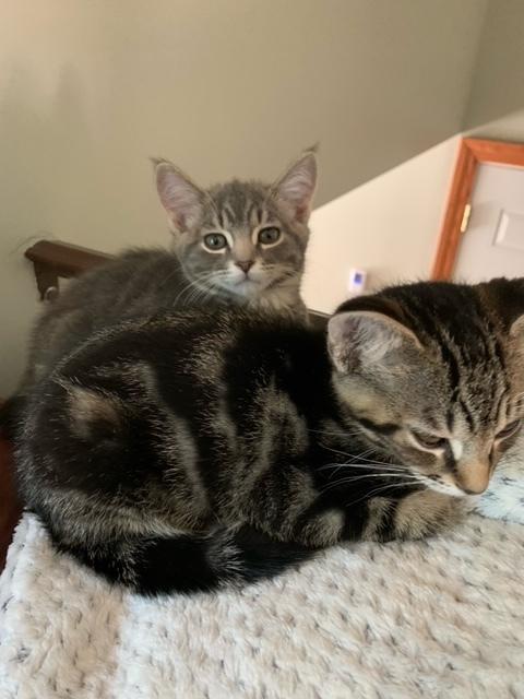 Odin & Loki (Bonded Pair) - Pending Adoption 4