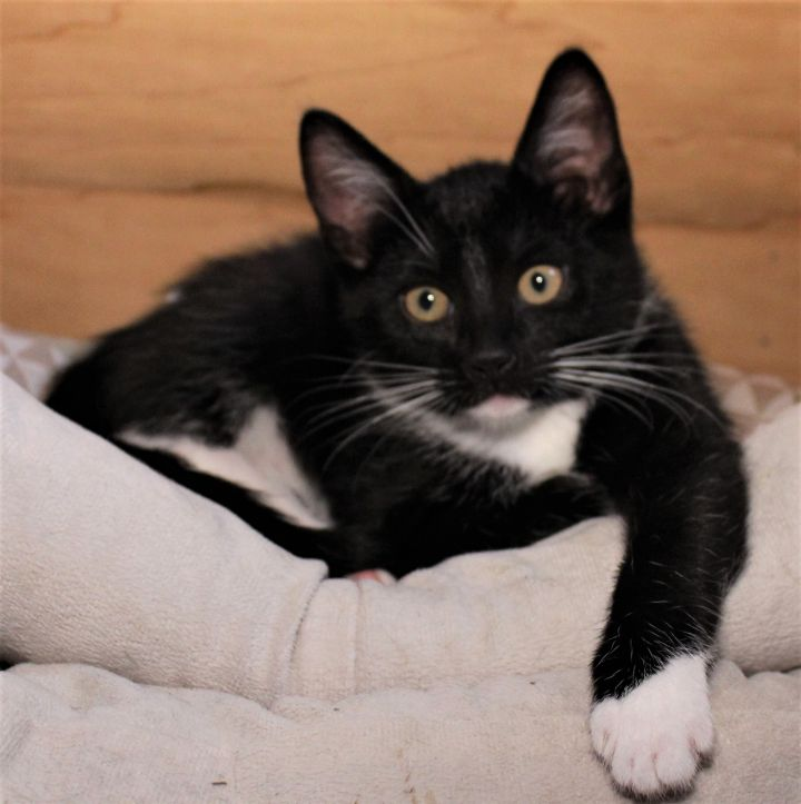 Winston - Not Currently Accepting New Applications (Waitlist Only) 3