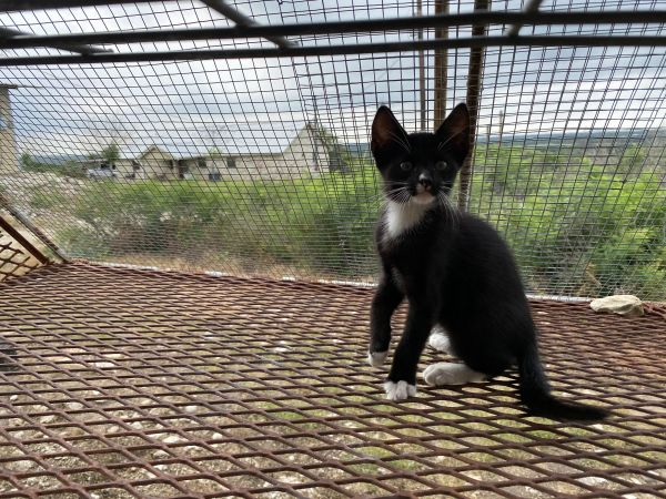 Sylvester-courtesy listing