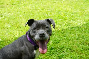 Stella is a people pleaser She loves to chill with a person and even prefers co