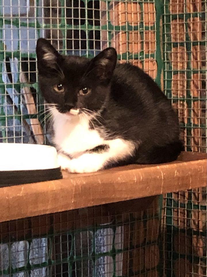 Paulison Kittens- Courtesy Posting- Not at Shelter 2