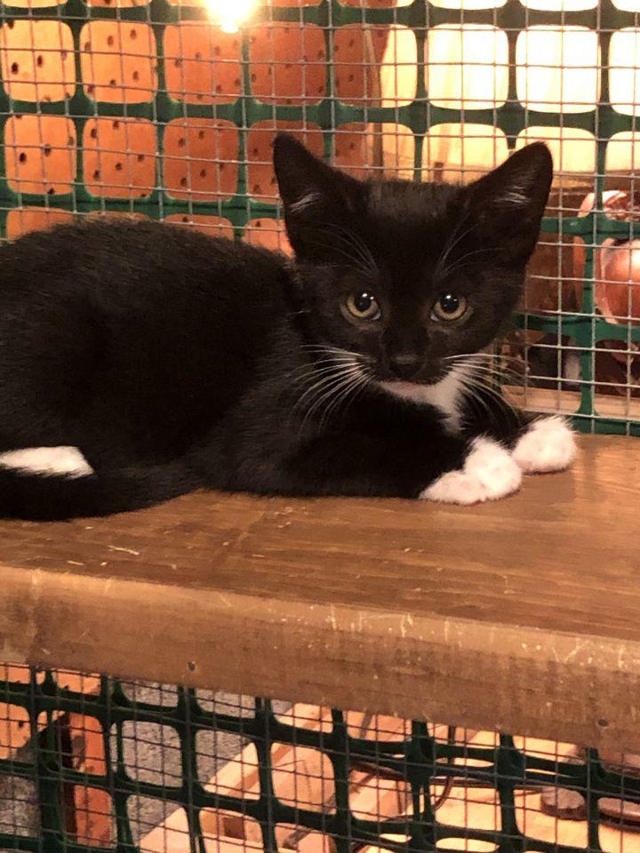 Paulison Kittens- Courtesy Posting- Not at Shelter 3