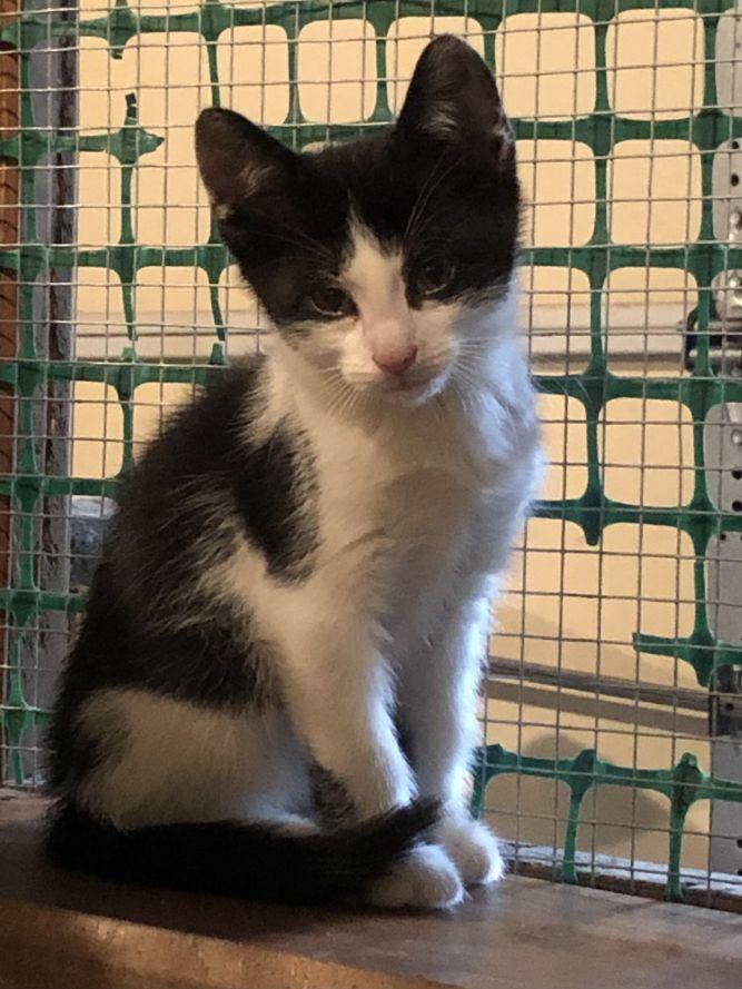 Paulison Kittens- Courtesy Posting- Not at Shelter