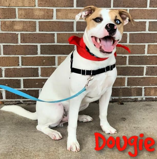 Dougie 1