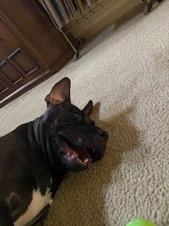 Mabel 5
