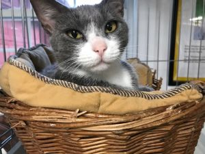 Trixie is the most wonderful affectionate and loving cat ever If you are looking for a companion c