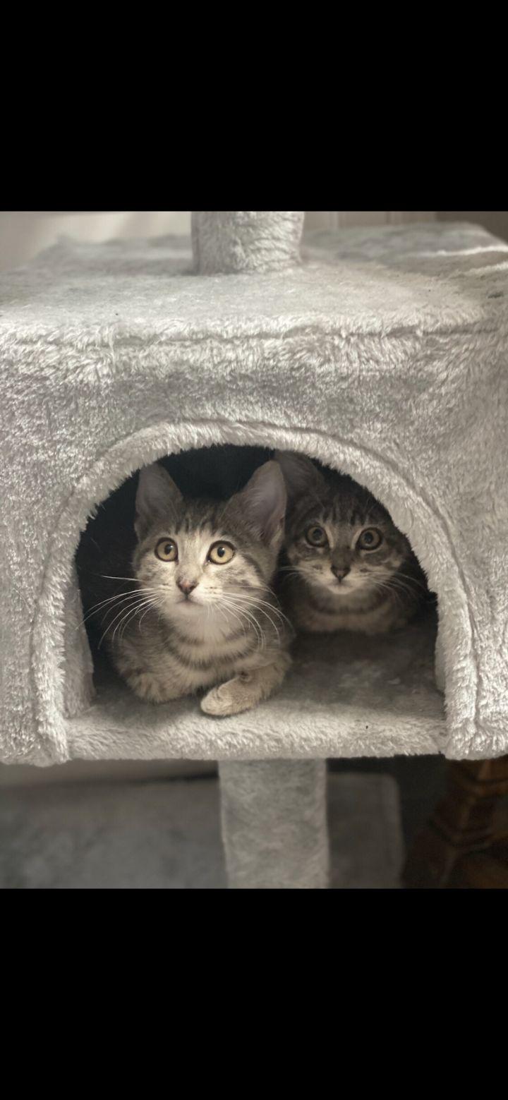 Finn and Frankie 1