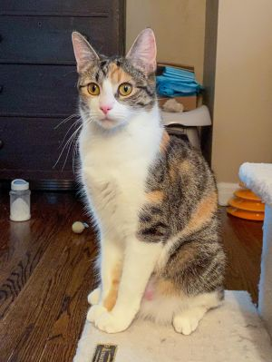 Now Its Moms Turn Meet Kokomo a friendly funny and affectionate young mother rescued when she w