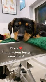Meet our newest special pup 6m Nova from India  She has some paralysis in her back legs which they