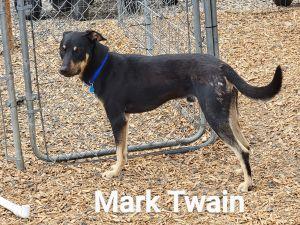 Mark Twain (aka Buddy)