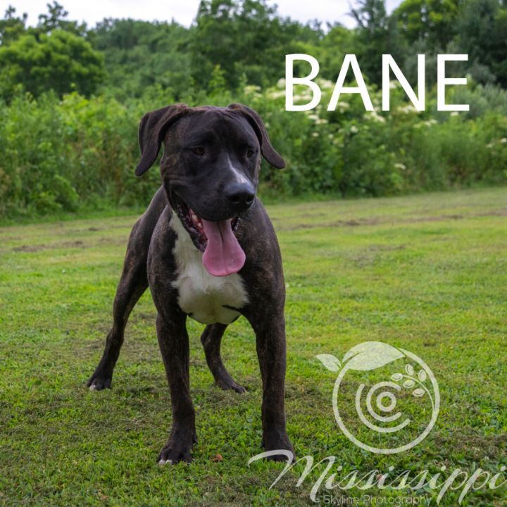 Bane 4