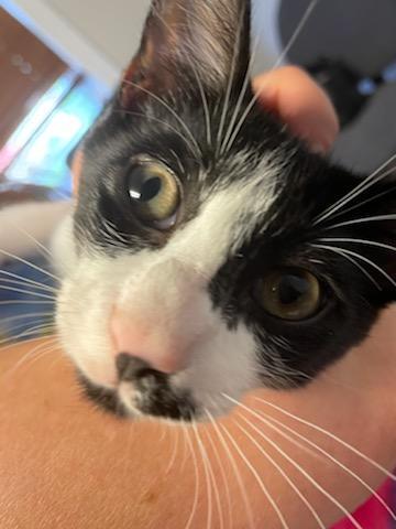 Orlando FL Tux kitty 1