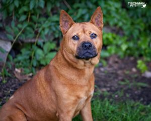 TO APPLY GO TO wwwLuckyDogRefugecom Meet Ginger a 5 year old sweetheart from Alabama We suspec