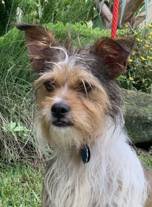 Meet Mozart the lively boy with that wild tousled hair look Red Collar pulled Mozart from a local