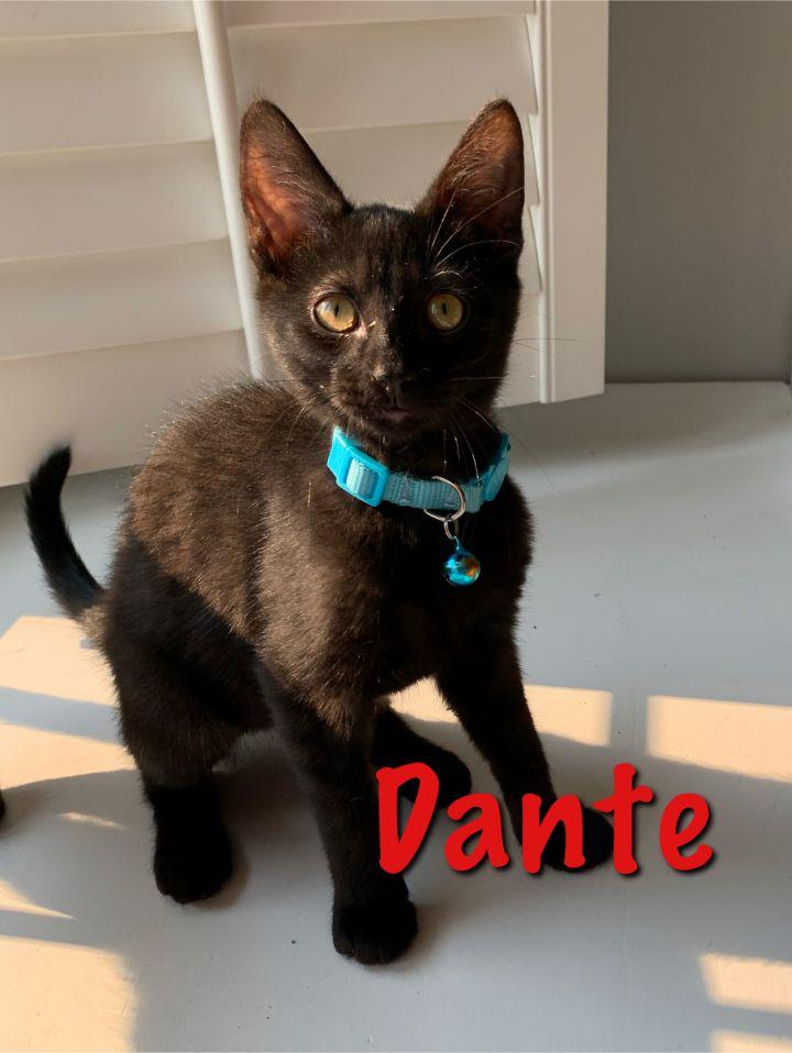 Dior and Dante 1