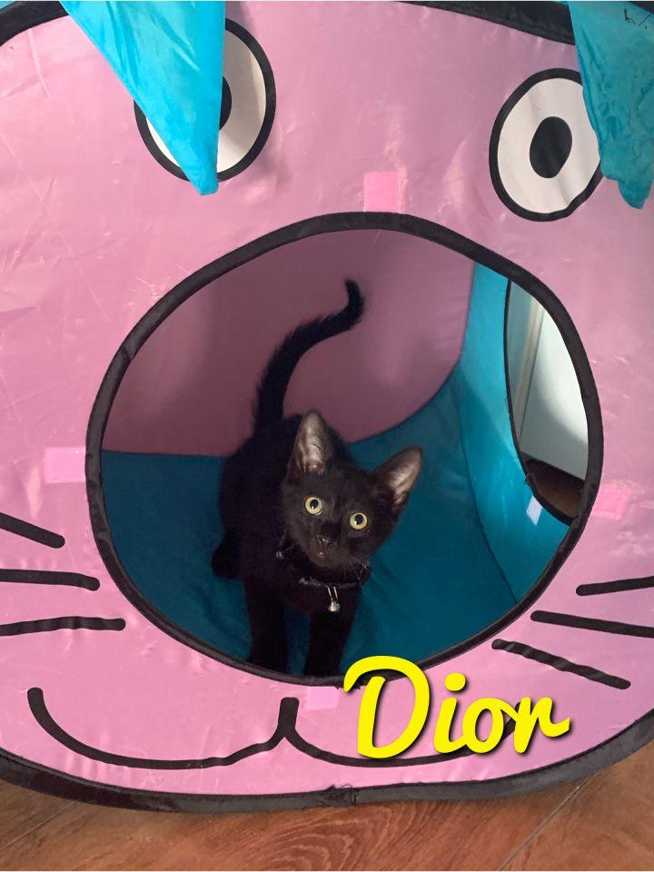 Dior and Dante 2