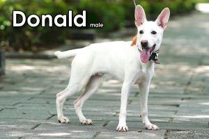 Donnie Mountain Dog Dog