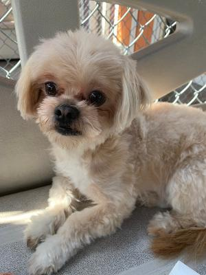 My name is Peanut I am a little 3 year old Shih Tzu mix Im not sure but maybe a