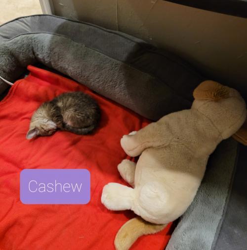 Cashew 3