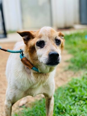 You can fill out an adoption application online on our official websiteJonah GA is a male Jack Ru