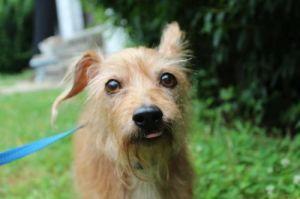 Maxine (NJ) Mixed Breed Dog