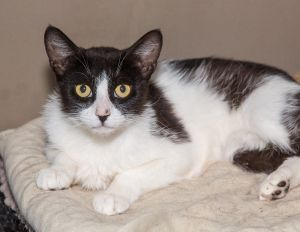 For more information or to meet this kitty please email start2njyahoocom