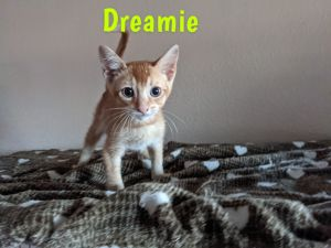 7 kittens saved from abandoned house 5 shown here are playful and recently vette