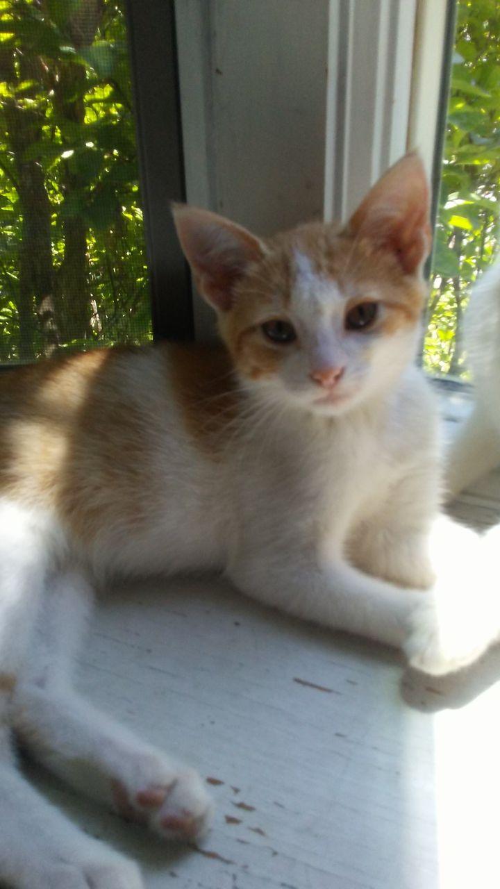 Sheeran (Orange litter) 5