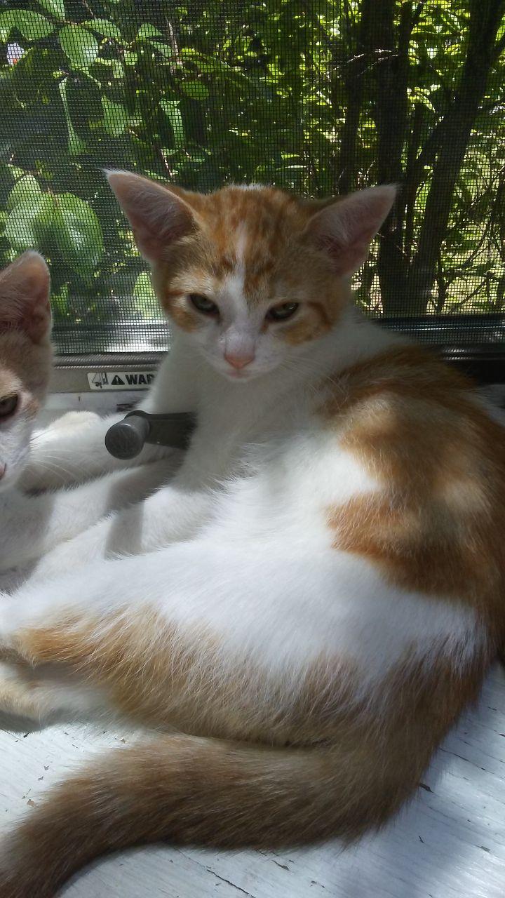 Spot (Orange litter) 3