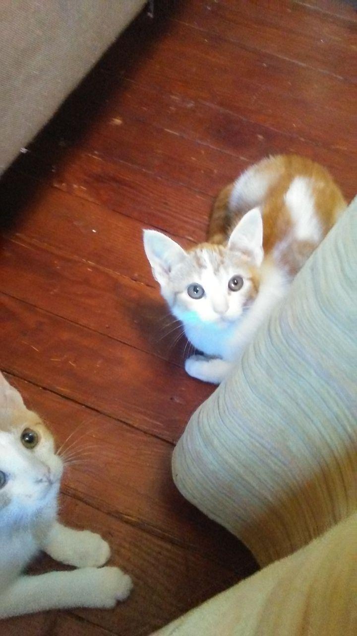 Spot (Orange litter) 4