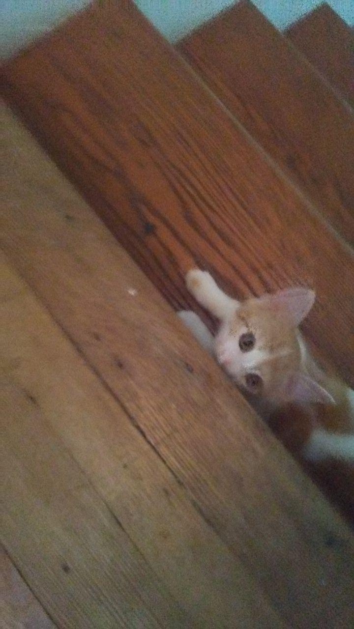 Spot (Orange litter) 5