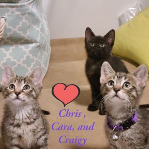 Cara Craigy and Christopher are 3 adorable extremely sweet loving healthy babies looking for the