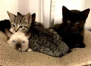 August 6 Update as of today two boys one black and one tabby are still available for adoption W