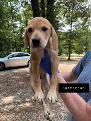 You can fill out an adoption application online on our official websiteButtercup AL is a female B