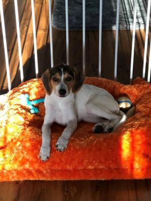 You can fill out an adoption application online on our official website Bubbles AL is a female Be