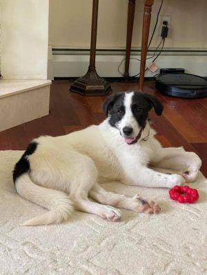 You can fill out an adoption application online on our official websiteLena AL is a spayed female