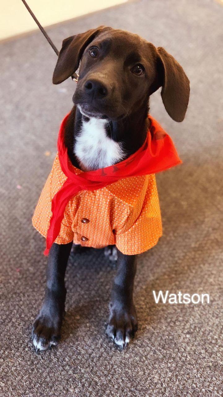 Watson 5